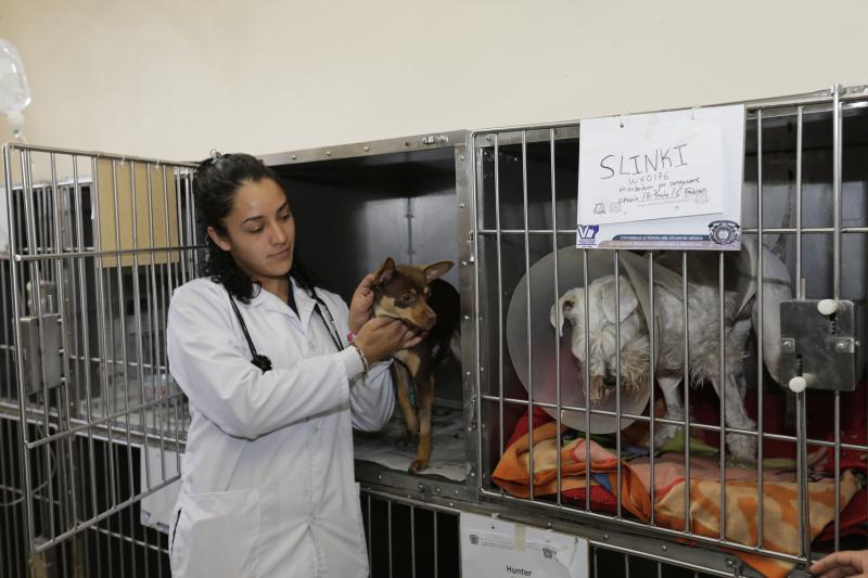 CENTRO DE REHABILITACION CANINA