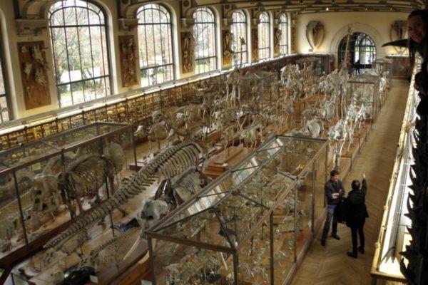 UNE LAZOS CON EL MUSEO DE HISTORIA NATURAL DE PARIS