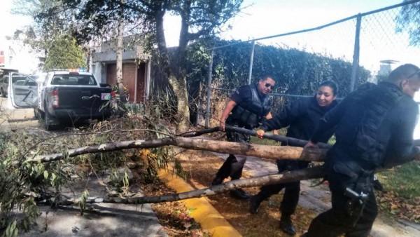 Se realiza poda de árboles, rehabilitación de lámparas, así como limpieza de cunetas y postes.