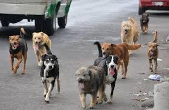 """""""Yo creo que si se hace el área para perros, ahí podrían estar mejor, sin molestar a otras personas que utilizamos el parque con un fin deportivo, además de exigir que lleven bolsas para recoger los desechos"""", comentó un usuario"""