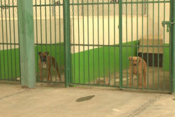 CENTRO DE CONTROL ANIMAL TOLUCA